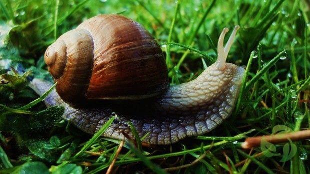 Slakken in de moestuin bestrijden   Biologisch • website