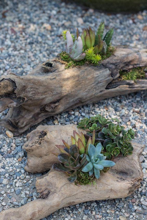 #流木 #多肉植物 #bonsai art #盆栽 (Via: 苔と庭 ) ほぉ!これは新しい! 流木を鉢植え代わりにするってなかなか粋な感じですね。 枯山水風に砂を敷き詰めるなら、K砂をどうぞ。
