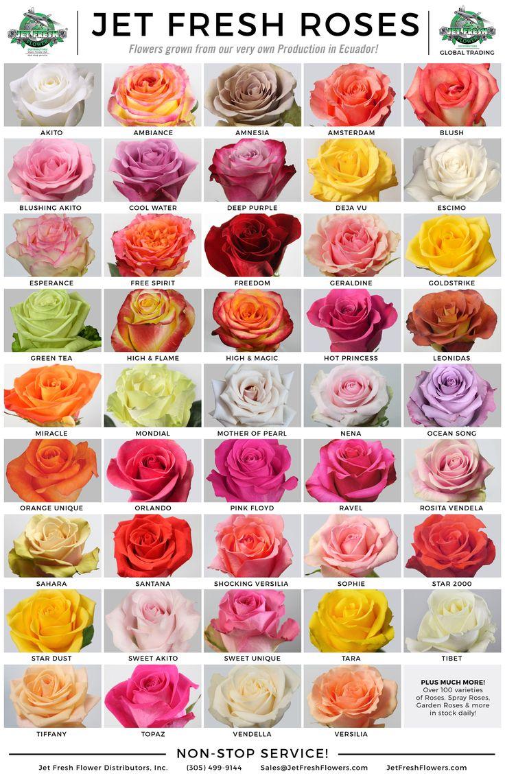 сорта роз с фото и названиями эквадор если вашем