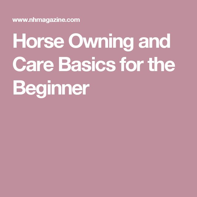 Horse Owning and Care Basics for the Beginner
