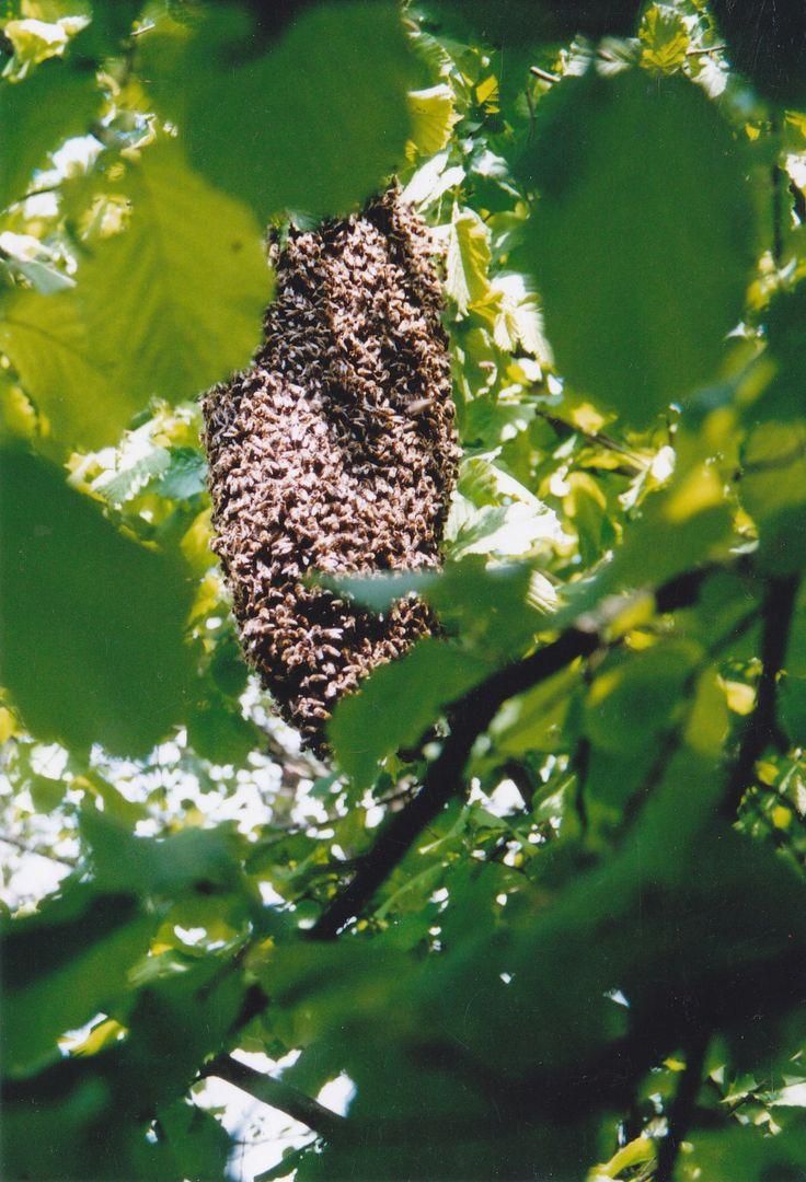 Fabulous Fernkurs Nr Imkereikurse fuer Anfaenger wesensgemaesse Bienenhaltung in Obertraegerbeuten Top