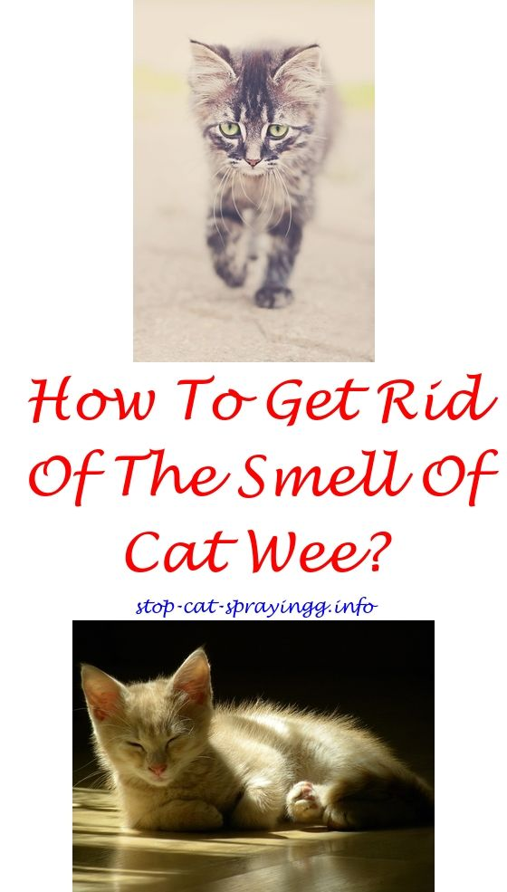 Flea Spray For Cat Bedding Bitter Le Cats Ings Homemade Citrus How To Stop Spraying