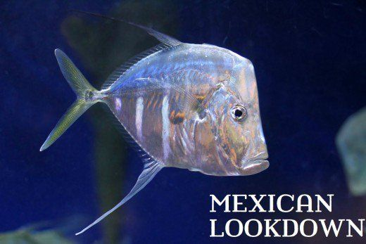 Mexican Lookdown