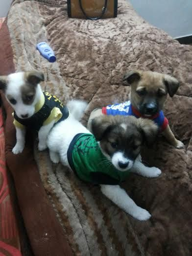 Mixed Breed Dogs For Adoption Delhi