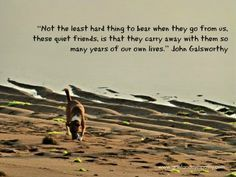 """""""....they carry away with them so many years of our own lives"""", John Galsworthy Dog Quote on a greeting card. Available from Zazzle.com in aid of Bali Animal Welfare Association. – More at http://www.GlobeTransformer.org"""