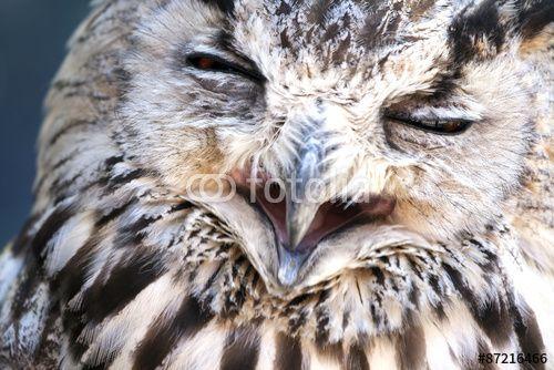 Portrait of The Eurasian #Eagle Owl (Bubo bubo)