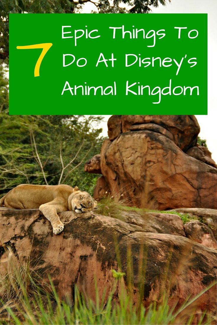 Have you visited Disney's Animal Kingdom? It is one of my favorite theme parks, offering rides, Broadway style shows, delicious food, and dozens of animal exhibits. It is a great day for the whole family .