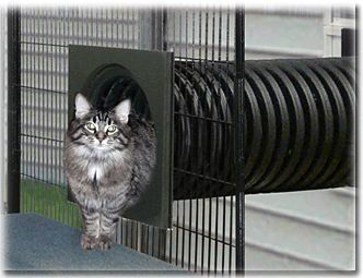 awesome way to let kitties inside and out