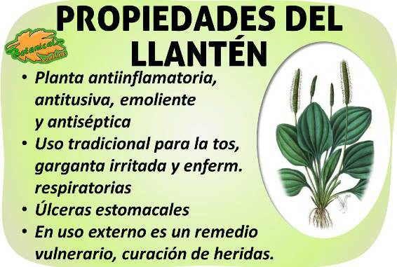 Plantas medicinales para garganta irritada