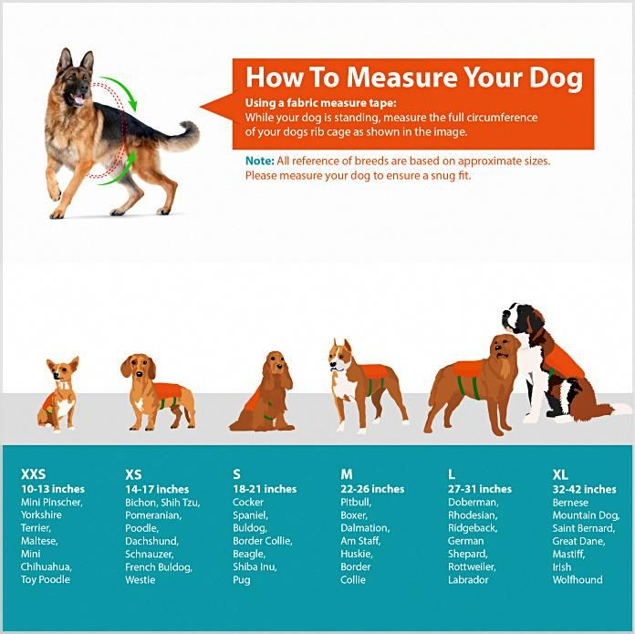 What Makes My Dog Training System So Unique Service Dog Training