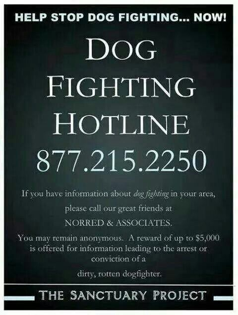 help stop dog fighting Dane county humane society is dedicated to helping animals that are victims of   dogfighting: how to spot it and how to get $5,000 for reporting it (humane.