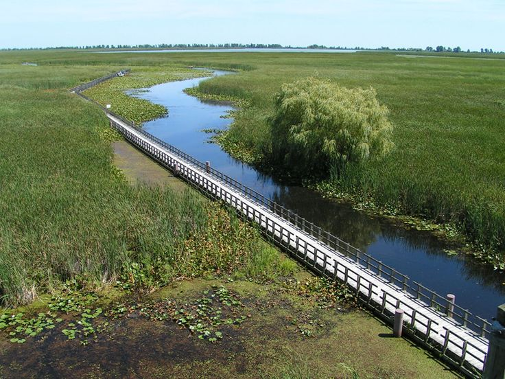 Boardwalk, Point Pelee National Park, Windsor, Ontario