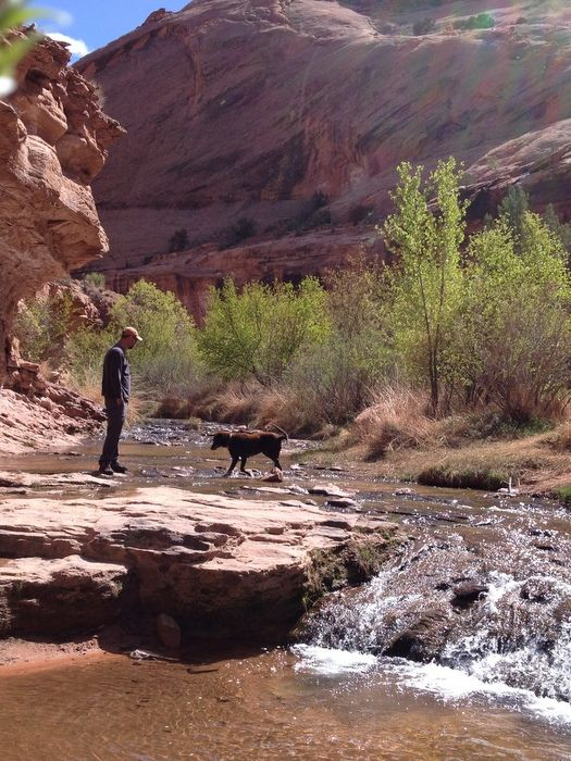 Best Places To Take Dog Zion