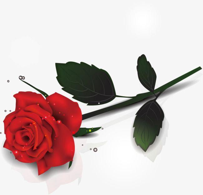 الورود الجميلة ناقل البحر Beautiful Roses Beautiful Rose