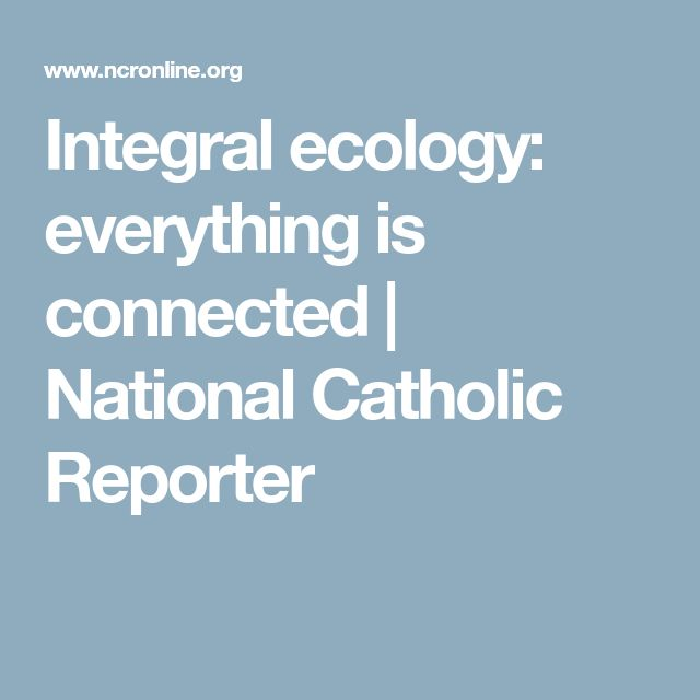 Integral ecology: everything is connected | National Catholic Reporter