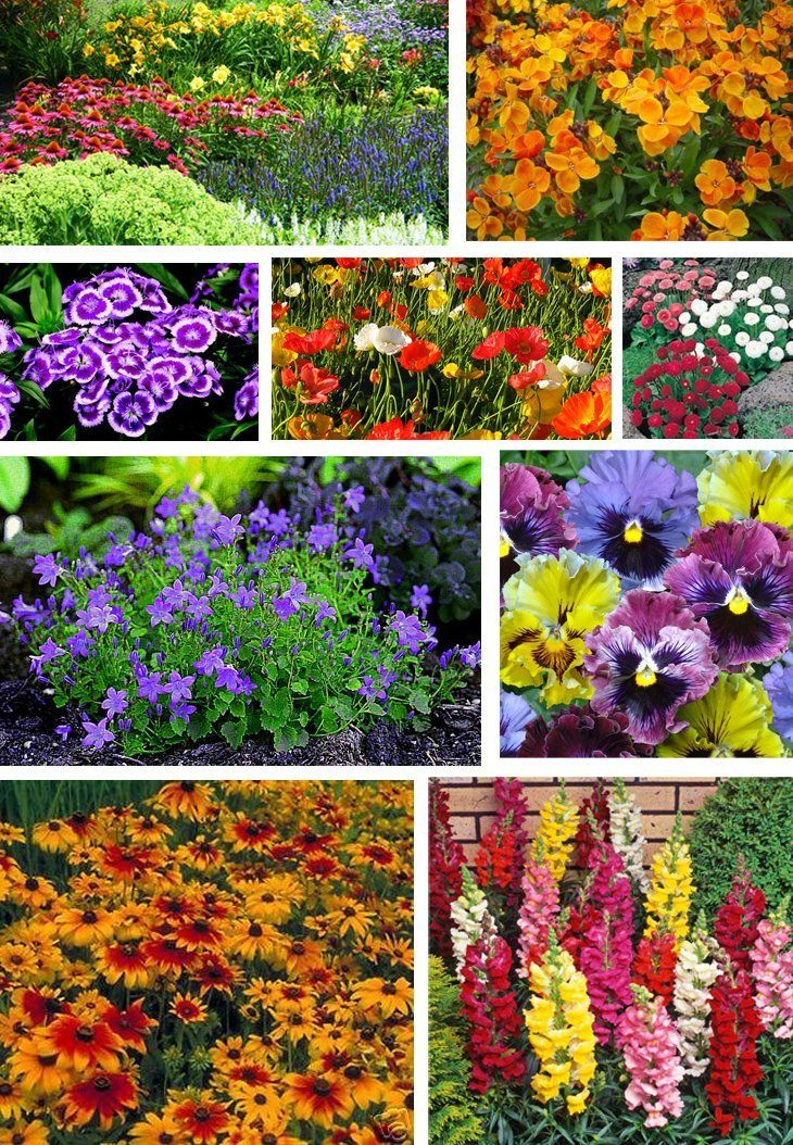 Mixed Perennial Flowers Seeds 2000 +Rainbow of colours in