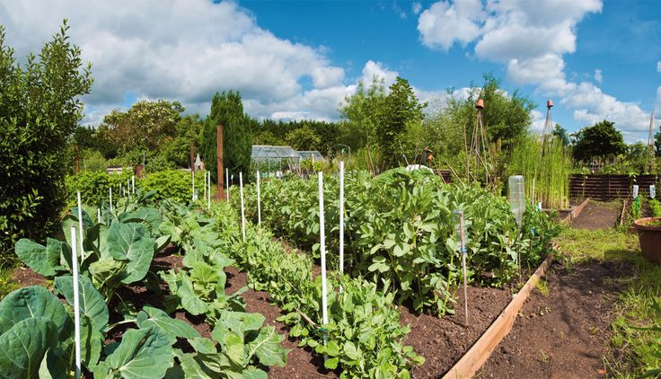 Many gardeners find with companion planting they can significantly reduce the need to spray and create a great mix of colour they wouldn't otherwise have. It also encourages flowers to be mixed in with vegetables.