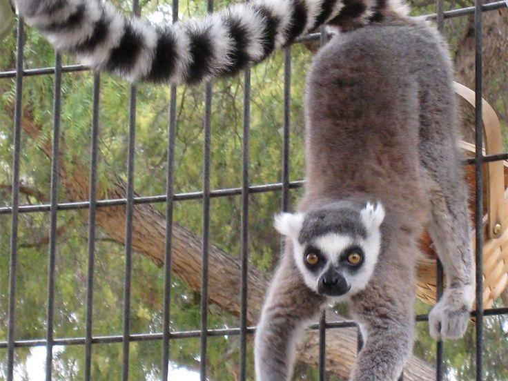 Hoollongapar Gibbon Wildlife Sanctuary - in Assam, India