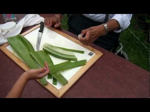 Aloe Vera Jeli Nasıl Yapılır? adlı makalemizde mucize bitki aloe veranın fa…