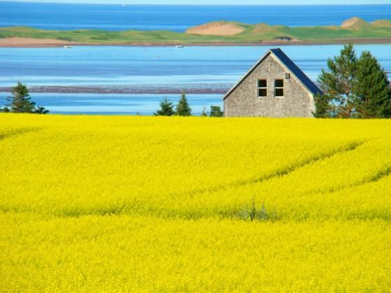 Beautiful view of the canola field and the sand hills on a hot July day by Kjfraser