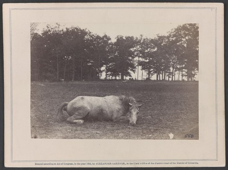 """Image entitled """"Confederate colonel and horse, both killed at the Battle of Antietam,"""" taken by Alexander Gardner. This is one of the war's most frequently seen animal images. Library of Congress Prints and Photographs Division Washington, D.C. 20540 USA"""