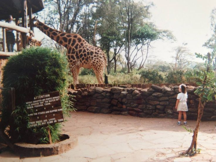 Giraffe Centre in Nairobi - The centre is opened to everyone in order to make people aware of the animals' plight and to educate them, but it is also a unique opportunity to get close to the giraffes, play with them and stroke them – the children go wild with excitement, and to be honest, so do we.