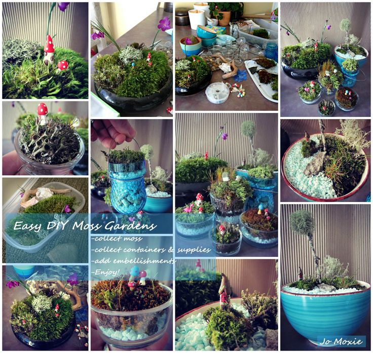 Collage of my new moss gardens! So fun to make and give away :) Some helpful tips: I bought the pretty blue rocks at the dollar store, along with the pebbles I used to layer inside the pot (for drainage). Layer like this: Small pebbles, activated charcoal ( I skipped this step cause I didn't have any), thin layer of dirt, moss.