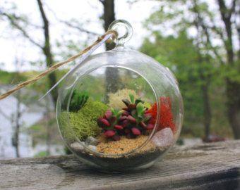 hanging terrarium – Etsy