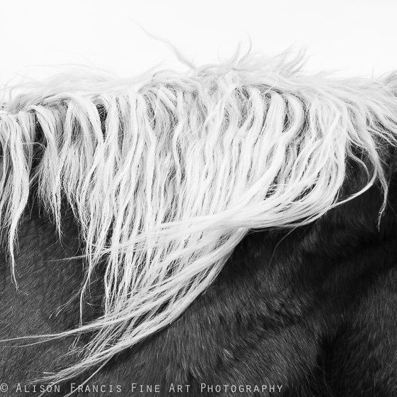 Black and White Horses Mane: Horse photography, wispy mane, minimalist photography, abstract art, western art, rustic, elegant, country chic