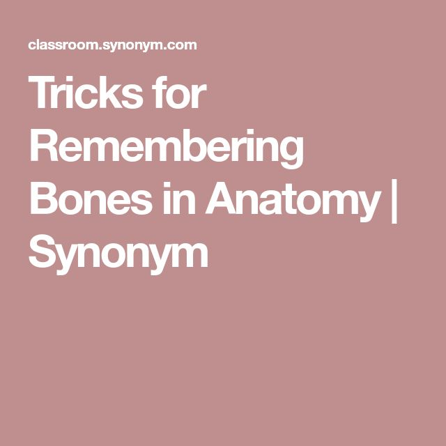 Creative Writing Tips · Tricks For Remembering Bones In Anatomy | Synonym  Synonyms For Resume Writing