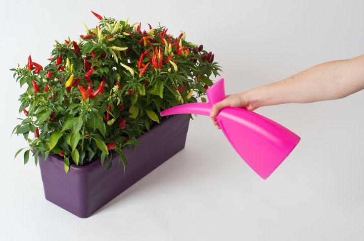 Window box Extra Flor.