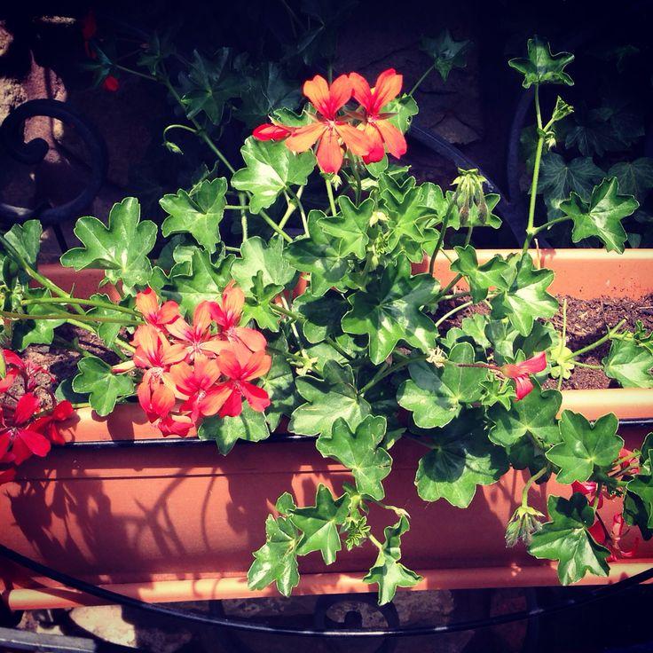 Flowers in Summer in the garden
