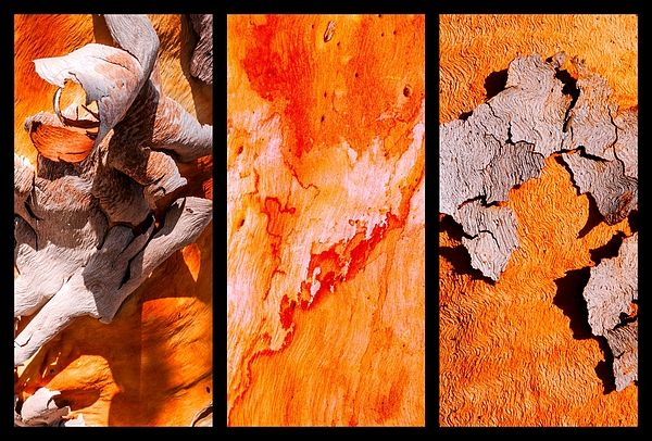 Salmon Gum Tree Triptych #3  Australian Tree Bark Series by Lexa Harpell. A collection of Aussie tree bark images. Taken from my travels around Australia. Add a splash of COLOUR and UNIQUE LOOK! Visit my photo gallery and get a beautiful Fine Art Print, Canvas Print, Metal or Acrylic Print OR Home Decor products. 30 days money back guarantee on every purchase so don't hesitate to add some AUSTRALIAN INTIMACY in your home.