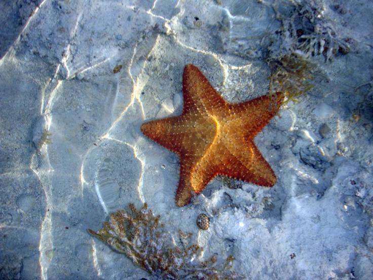 17 Best Images About Nassau Bahamas On Pinterest Conch