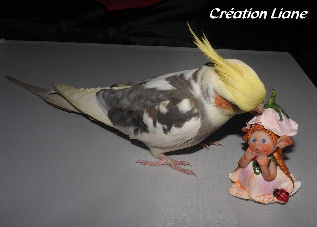 Loki, ma calopsitte (cockatiel)