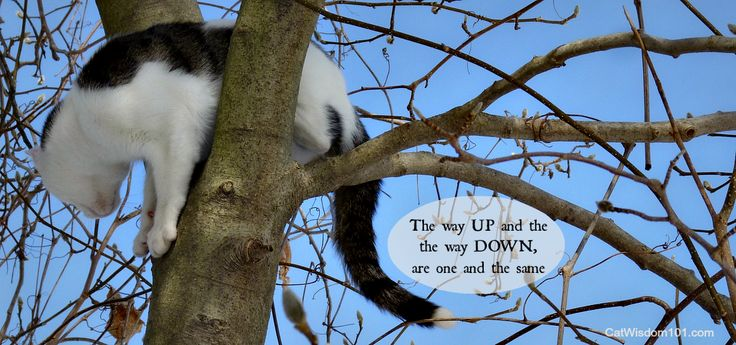 Odin #adventurecat demonstates his tree climbing techniques and why cats need their claws. Cat Wisdom 101 The Paw Project
