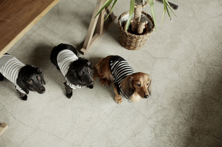Wear for dog