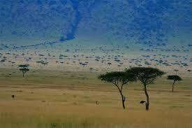 Crecen también en la sabana palmeras comunes, y en las comarcas más secas acacias de diverso tamaño y tipo. Son tres las acacias más importantes: acacia ...