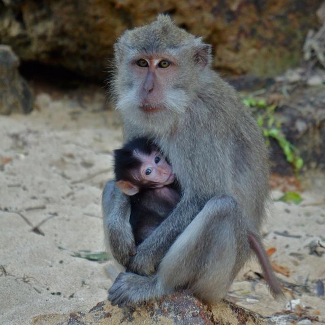 Monkey Forest, Kuta, Lombok, Indonesia