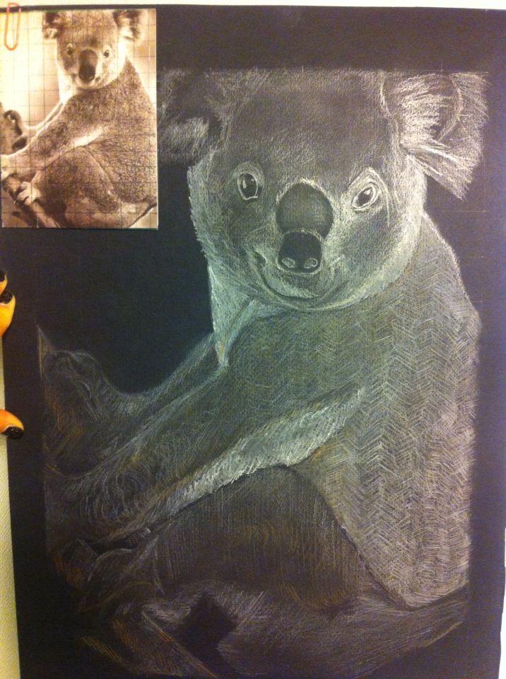 Disegno koala Matita bianca