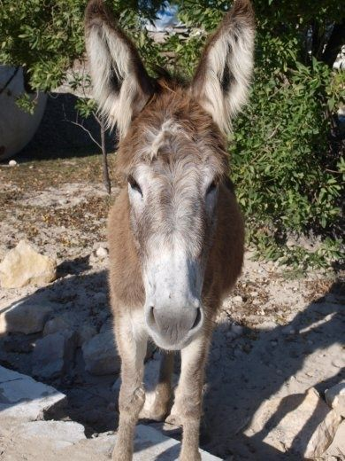 Donkeys roam free on Salt Cay, an island time forgot... looking forward to exploring!