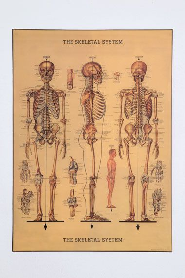 Skeleton Poster from Urban Outfitters: Idea, Wrapping Papers, Art, Skeletons, Skeleton Wrapping, Skeletal System