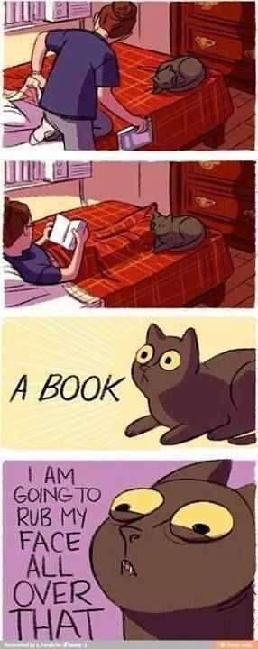 What is it with cats and books?! <-- they can't read, but they still love books. Before I could read, my mother says I sat around chewing on books.