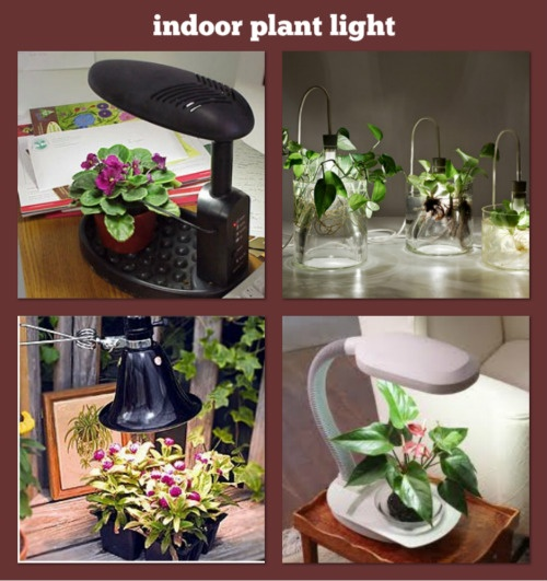 25 best indoor plant lights ideas on pinterest indoor plants low light low light plants and - Best compost for flower pots solutions within reach ...