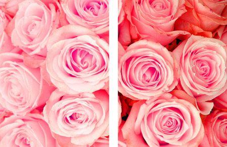 Fiori 143 - Fiori - Foto Artistiche su Tela - Listino prodotti - Digitalpix - Artistic photo - Canvas art - Flower - Home decor - Decorazione casa - interior design ideas - idee design interni