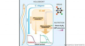 New insights on how the microbiome may dictate the efficacy of chemotherapeutic drugs - Gut Microbiota for Health