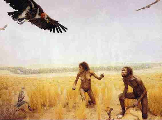 An early hominid, Homo erectus, depicted in this diorama from the American Museum of Natural History's Hall of Human Biology and Evolution, lived nearly 2 million years ago in the eastern Rift Valley of Africa.: Human Evolution, Human Biology, Ants Lo, Investigador Descubr, Exploring Left, Entr The, Dioramas Dramas, Human Factors, American Museums