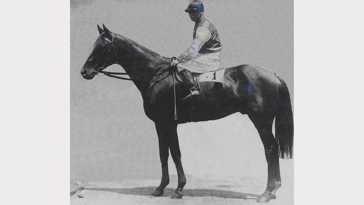 POITREL, winner of the 1920 Melbourne Cup.