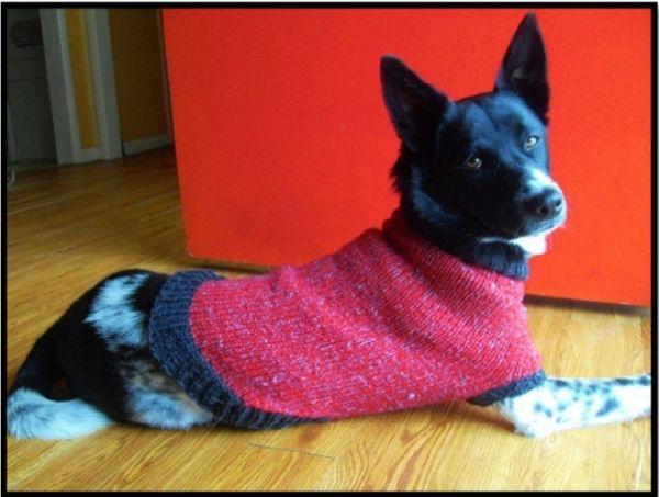 Αυτό το πουλόβερ δουλεύεται με φορά από πάνω προς τα κάτω και χωρίς ραφές, σε γύρους, σηκώνοντας πόντους για το κάτω τμήμα και τα μανίκια. Απαιτούνται πολλοί εύκολοι υπολογισμοί για να βρείτε την τέλεια εφαρμογή για τις διαστάσεις του σκύλου σας.