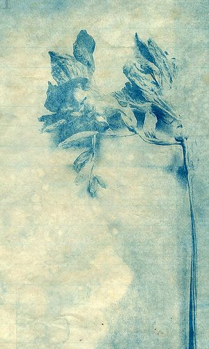 Lynnette Miller. Negative version of the photo onto acetate used that to make the cyanotype. Printed onto tea stained paper.